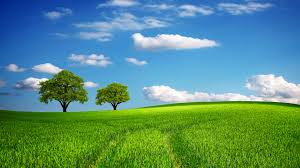 green grass field. Tree, Field, Green, Oak, Hill, Horizon, Sky, Spring, Green Grass Field