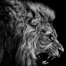 3D Animal Wallpaper Lion Wall Mural ...