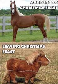 Another horse meme for ya! Who feels this? - AgWorkers Auto Insurance |  Facebook