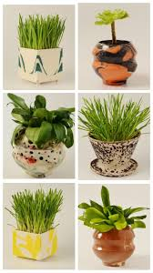 Succulent Pot Design Succulent Pot Succulent Planters Succulent Planter Ideas