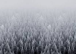 winter mac backgrounds ios 8 snow forest default mac desktop wallpaper snow