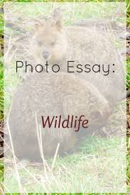 best ideas about photo essay documentary photo essay wildlife