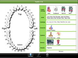 Tooth Meridian Chart Meridian Tooth Chart Tooth Chart Acupuncture Cure Tooth