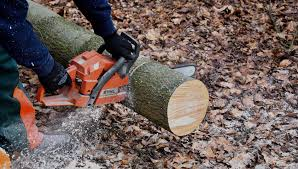 the leader in specialized tree service robs tree service d70