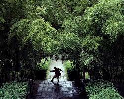 Risultati immagini per Lijiaquan