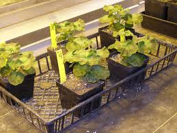 how to start a small garden. Small Plants In Wire Basket How To Start A Garden