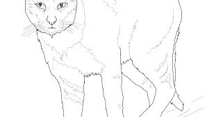 Free Big Cat Coloring Pages Akildefteriinfo