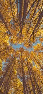 oe84-nature-fall-tree-autumn