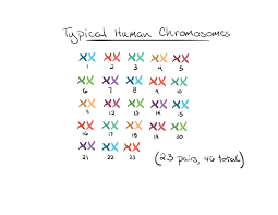 what is down syndrome article khan academy diagram of a typical set human chromosomes