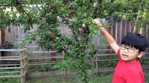 How To Run Rows Of Apple Trees  Home Guides  SF GateWhen Do You Plant Fruit Trees