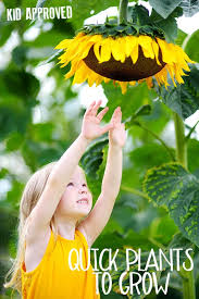 quick growing seeds and plants ideal for gardening with kids these fast growing plants are