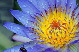 50 Beautiful Examples of <b>Flower</b> Photography | The JotForm Blog