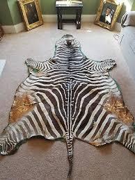 large hide taxidermy real zebra skin rug interior design hide brown white animal