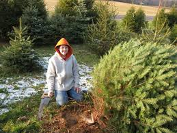 5 Places To CutYourOwn Christmas Tree Near NYC  Mommy NearestChristmas Tree Cutting Nj