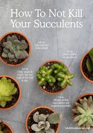 Small Picture Best 25 Succulent plants ideas only on Pinterest Suculent