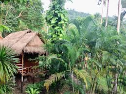little eden bungalows restaurant ranch reviews ko chang asia thailand