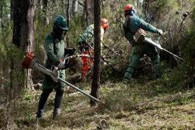 Autarca do Sardoal recusa distribuir folhetos do Governo sobre limpeza de terrenos