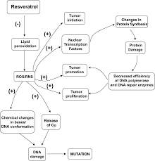 resveratrol as an antioxidant and pro oxidant agent mechanisms   figure