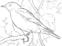 Eastern Bluebird Coloring Page Neycoloringsmart