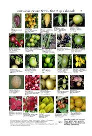 Cuesa Fruit Seasonality Chart What Fruits Grow In The Winter Garden Design Ideas