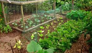 7 steps to create a permaculture garden