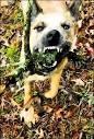 До какого возраста меняются зубы у собак