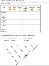 Solved 2 Pasta Classification How To Make A Cladogram A