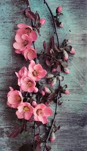 1113x1920 wallpaper iphone beauty pink flowers ⚪