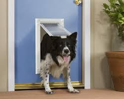 diy dog doors. How To Install A Doggie Door Diy Dog Doors S
