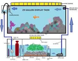 best ideas about aquarium sump saltwater tank saltwater sump diagram cdn saltwaterfish com 3