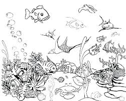 Betta Fish Coloring Pages Printable Fish Coloring Page Fish