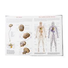 Wall Chart Of Human Anatomy Wall Chart Of Human Anatomy