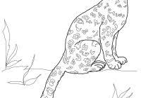 Easy Leopard Coloring Pages With Snow Leopard Sitting Coloring Page