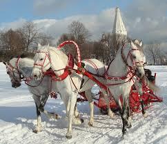 Картинки по запросу лошадки катание