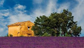 <b>Lavender fields</b> in Provence, <b>France</b> | Лавандовые поля во ...