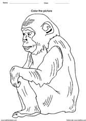 chimp coloring art activities and pictures for kids on evaluating logarithms worksheet