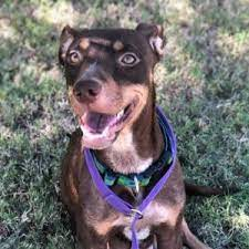 Lenora Crosby | Dog Ranch Rescue