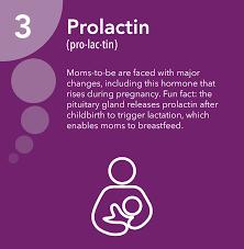 Prolactin Hormone Health Network
