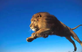 Image result for pouncing lion