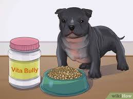 How To Feed An American Bully Puppy 7 Steps With Pictures