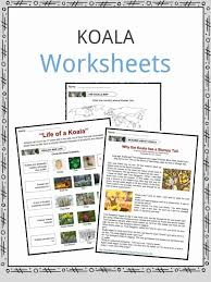 Koala Facts, Worksheets & Information For Kids