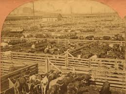 Image result for chicago stockyards 1900