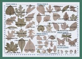 Top Treeleaves4 Herbology Pinterest Edible Wild Plants And