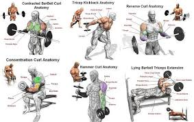 Gym Biceps Workout Chart Image Result For Biceps Workout For Men At Gym Bicep