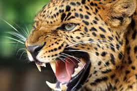 Wild Animal Wallpapers - Top Free Wild ...
