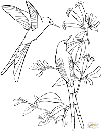Small Picture Long Tailed Sylph Hummingbird coloring page Free Printable