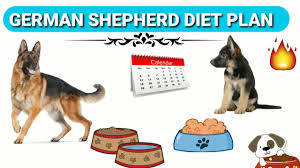 German Shepherd Puppy Food Chart German Shepherd Diet Plan In Hindi German Shepherd Chart