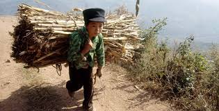 child labour child labor in in urdu