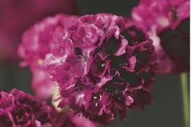<b>Семена цветов</b> купить, цена в интернет магазине «Возрождение»