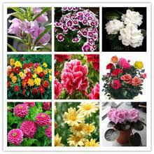 Online Get Cheap <b>Dahlia</b> Flower Plant -Aliexpress.com   Alibaba ...